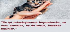 Hayvan Sevgisi İle İlgili Sözler