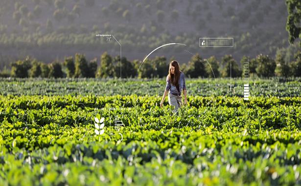 yapay zeka tarım