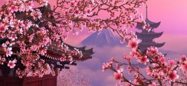 Sakura Nedir?